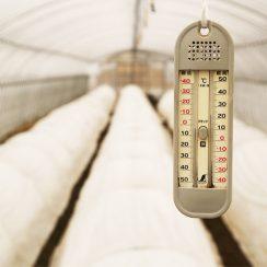 温かいハウスで、すくすく成長するお芋たち